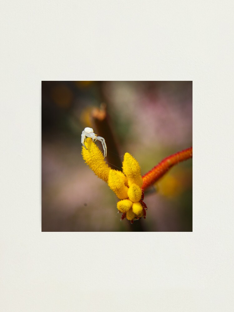 Alternate view of Incy wincy spider Photographic Print