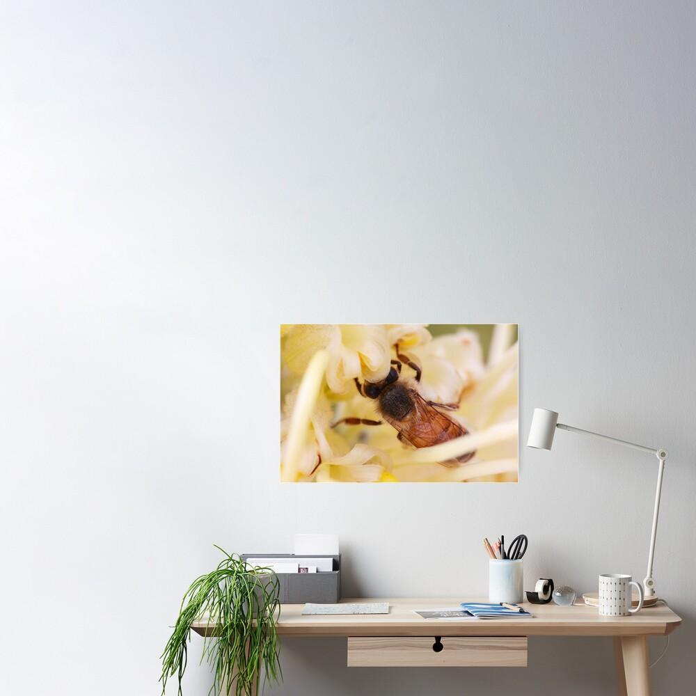 Bee hiding in the grevillea Poster