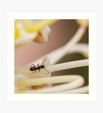 Ants love nectar too Art Print