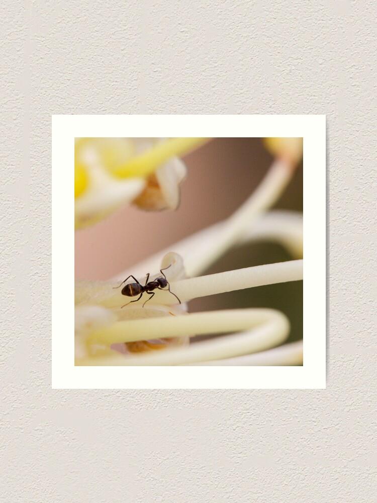 Alternate view of Ants love nectar too Art Print