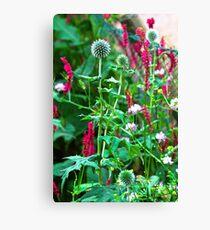 Romantic summer garden with globe thistle Canvas Print