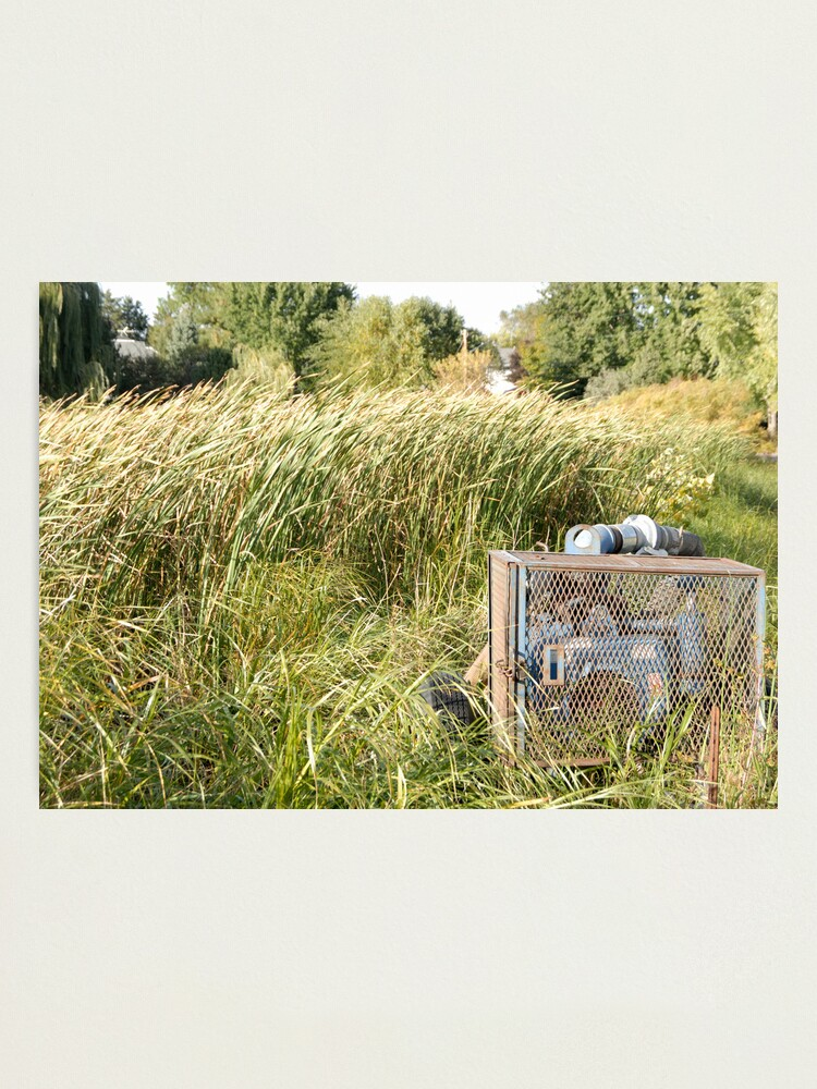Alternate view of Sump Pump In The Reeds Photographic Print