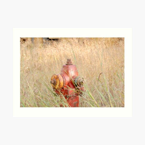 Fire Hydrent in tall grass Art Print