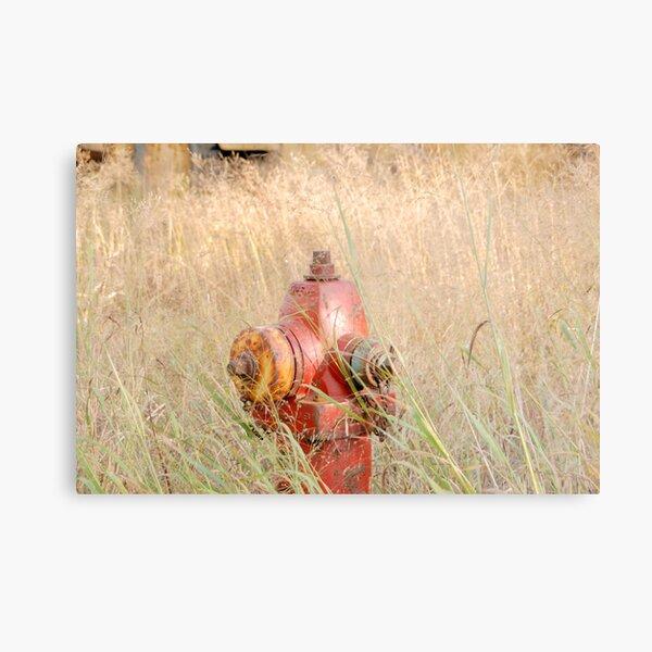 Fire Hydrent in tall grass Metal Print