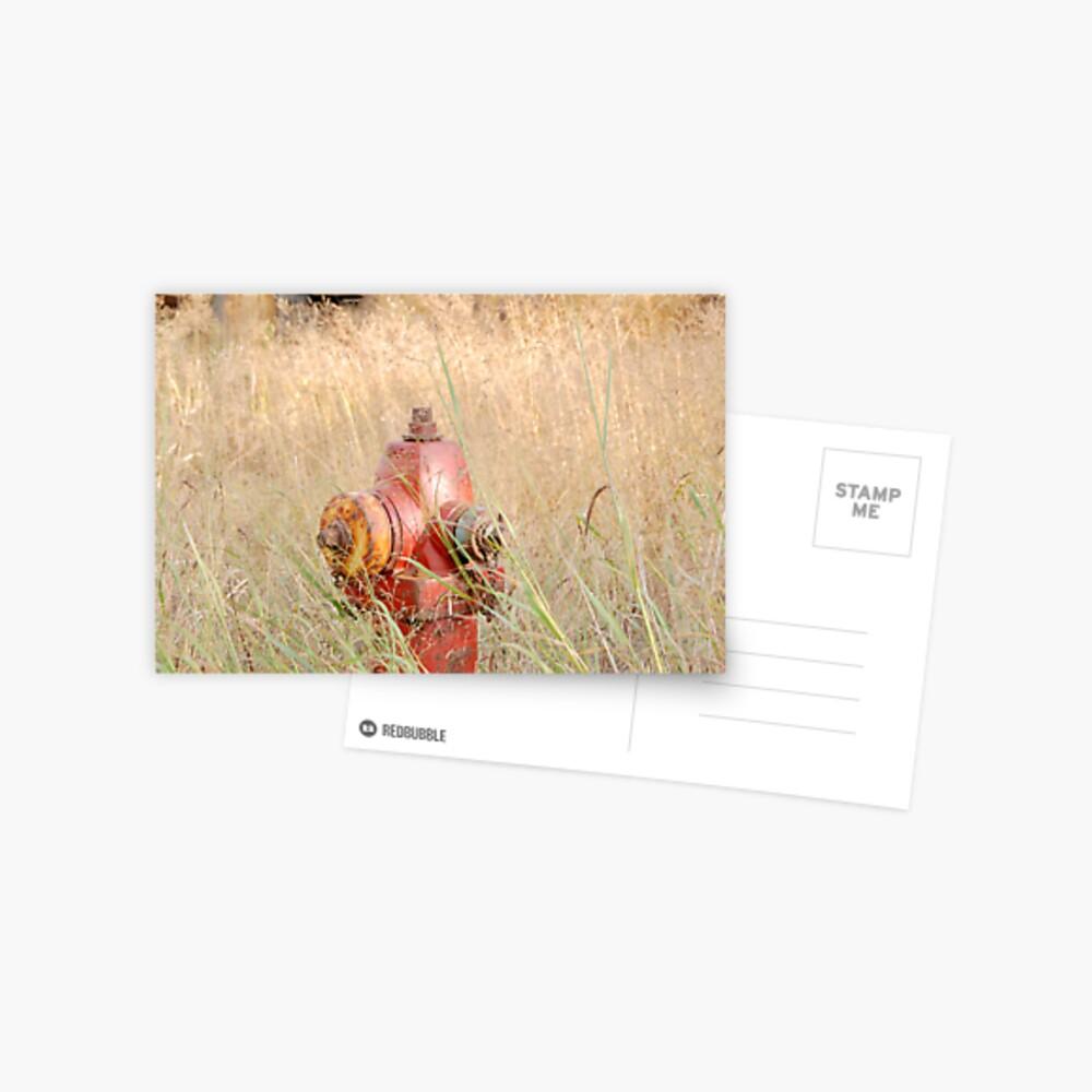 Fire Hydrent in tall grass Postcard
