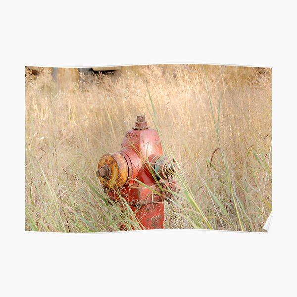 Fire Hydrent in tall grass Poster
