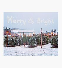 Christmas Trees for Sale Photographic Print