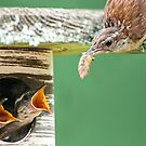 Lunch Time at the Wren Household by Bonnie T.  Barry