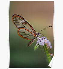 glasswing Poster