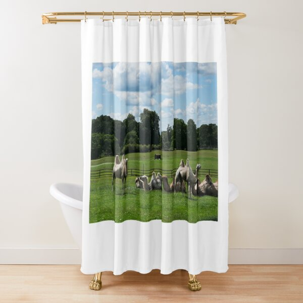 Double humped camels Shower Curtain