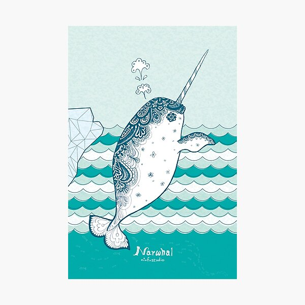 Narwhal Photographic Print