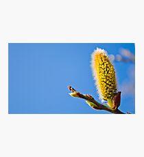 Plant, close up Photographic Print