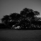 Tree of Life Black and White by Drew Hillegass