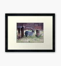 I am the eldest in my domain Framed Print