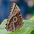 Butterfly Road by Roger  Swieringa
