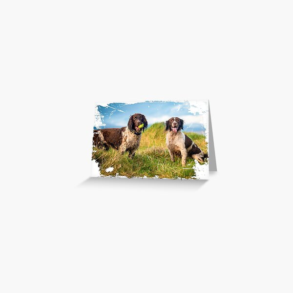Two English Springer spaniels in the country Greeting Card