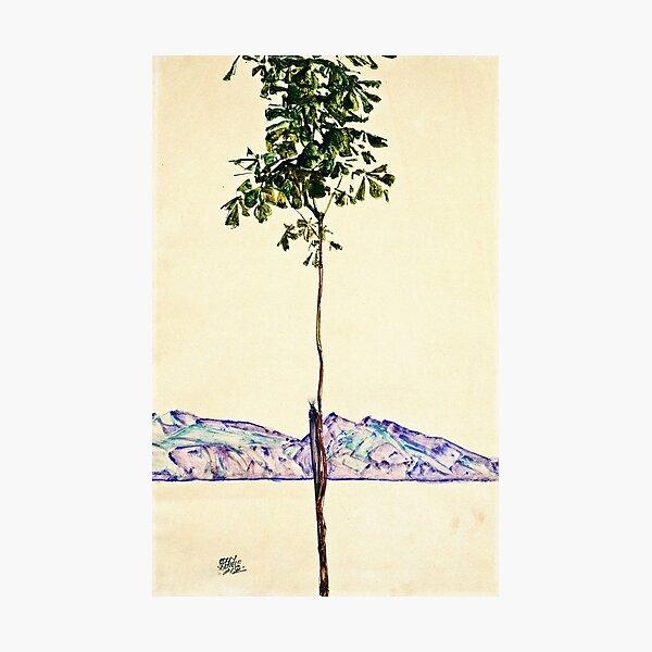 Egon Schiele -Little Tree Photographic Print