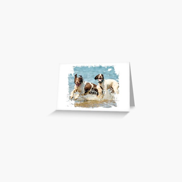 Two very happy English Springer Spaniels Greeting Card