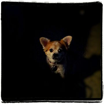 Doggie in the dark by NikkaPotts