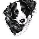 Border Collie Female by Nicole Zeug