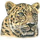 The Leopard - Portrait Amur Leopard by Nicole Zeug