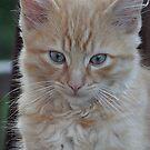 kitten by melynda blosser