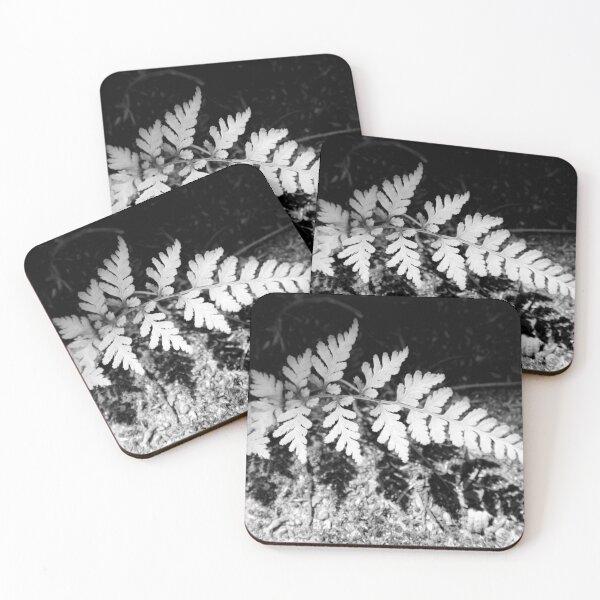 Shadow Fern Coasters (Set of 4)