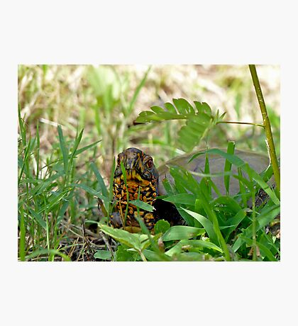 Hello Mr. Box Turtle Photographic Print