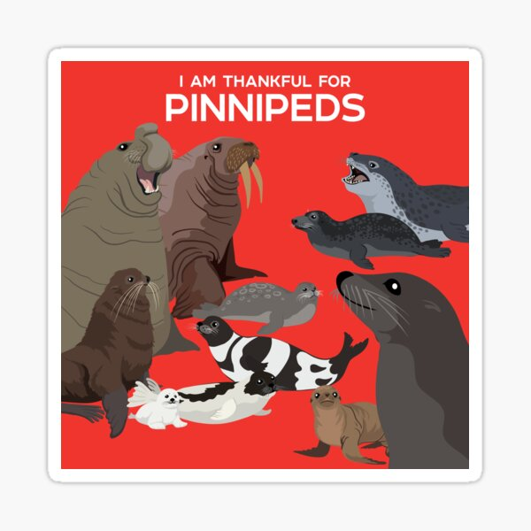 I Am Thankful For Pinnipeds Sticker
