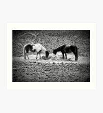 Horses in Hay equine artwork black and white art Art Print