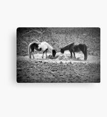 Horses in Hay equine artwork black and white art Metal Print