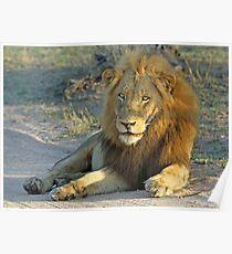 A Majestic Majingilane Boy! Poster