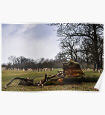 richmond park, surrey, england Poster