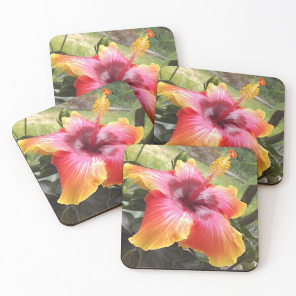 Hibiscus Spin The Bottle Coasters (Set of 4)
