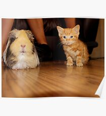 tiny kitty Poster