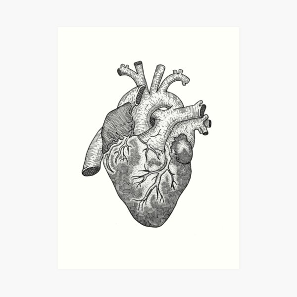 Anatomical Heart Ink Illustration Art Print