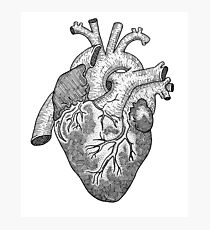 Anatomical Heart Ink Illustration Photographic Print