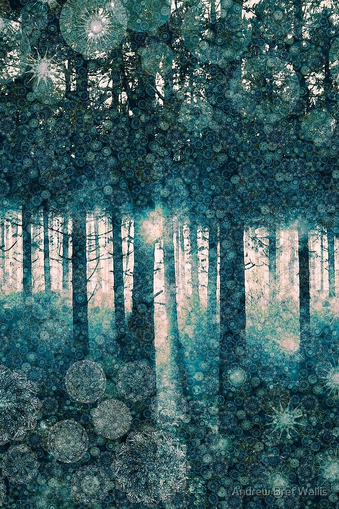 Enchanted Forest by Andrew Bret Wallis