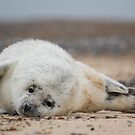 Seal Pup 3 by Ellesscee