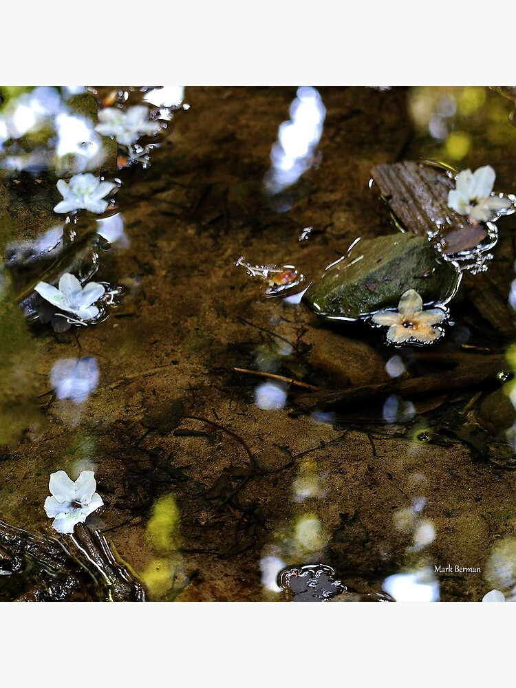Flower Reflections by mark-bugs-org