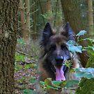 German Shepherd in the woods watching by Jan Carlton