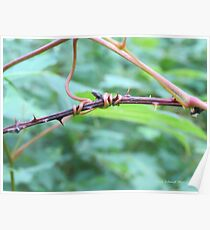 Tangled Vine Poster