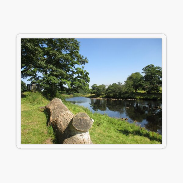 Merch #97 -- Stream Between Trees - Shot 6 (Hadrian's Wall) Transparent Sticker