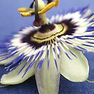 Dancing passion flower by freshairbaloon