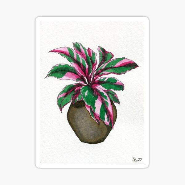 Pink Calathea Sticker