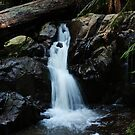 Waterfall gully. by Jeanette Varcoe.