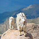 Mother and Baby Goat by Luann wilslef