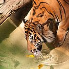 Tiger by Steve Hunter
