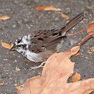 Sparrow by Steve Hunter