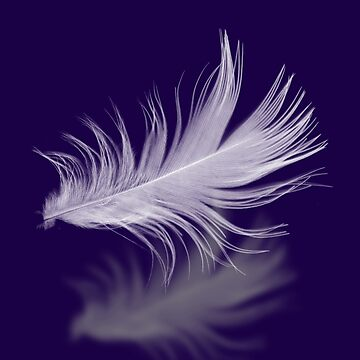 Feather by Lanas